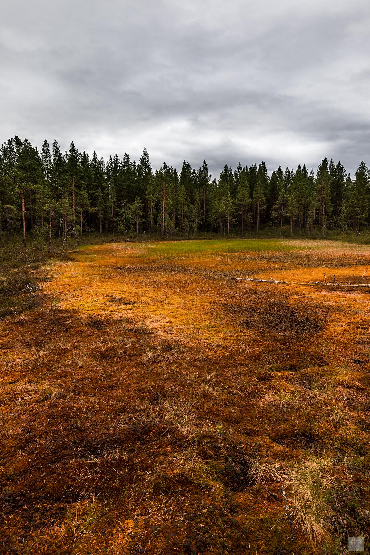 Norwegen-Finnmark-Pasvik NP