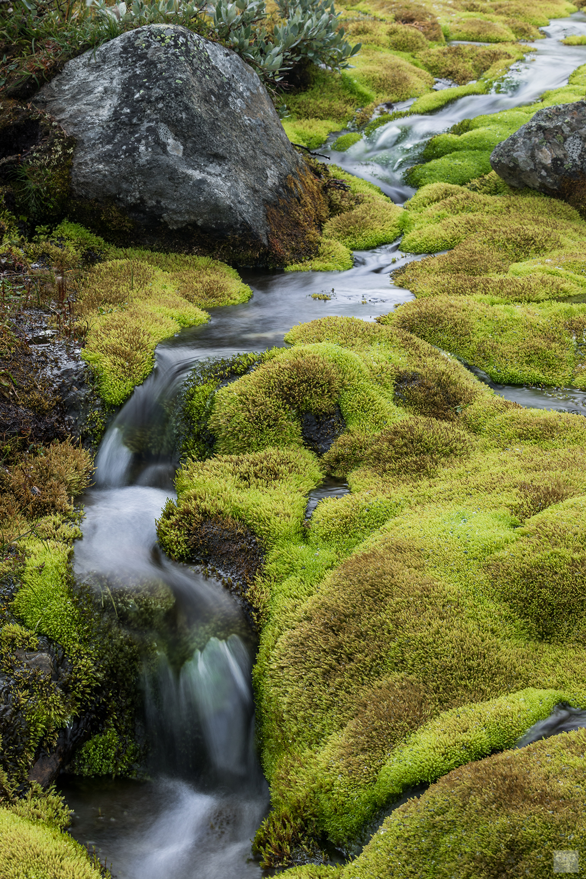 Norwegen - Dovrefjell