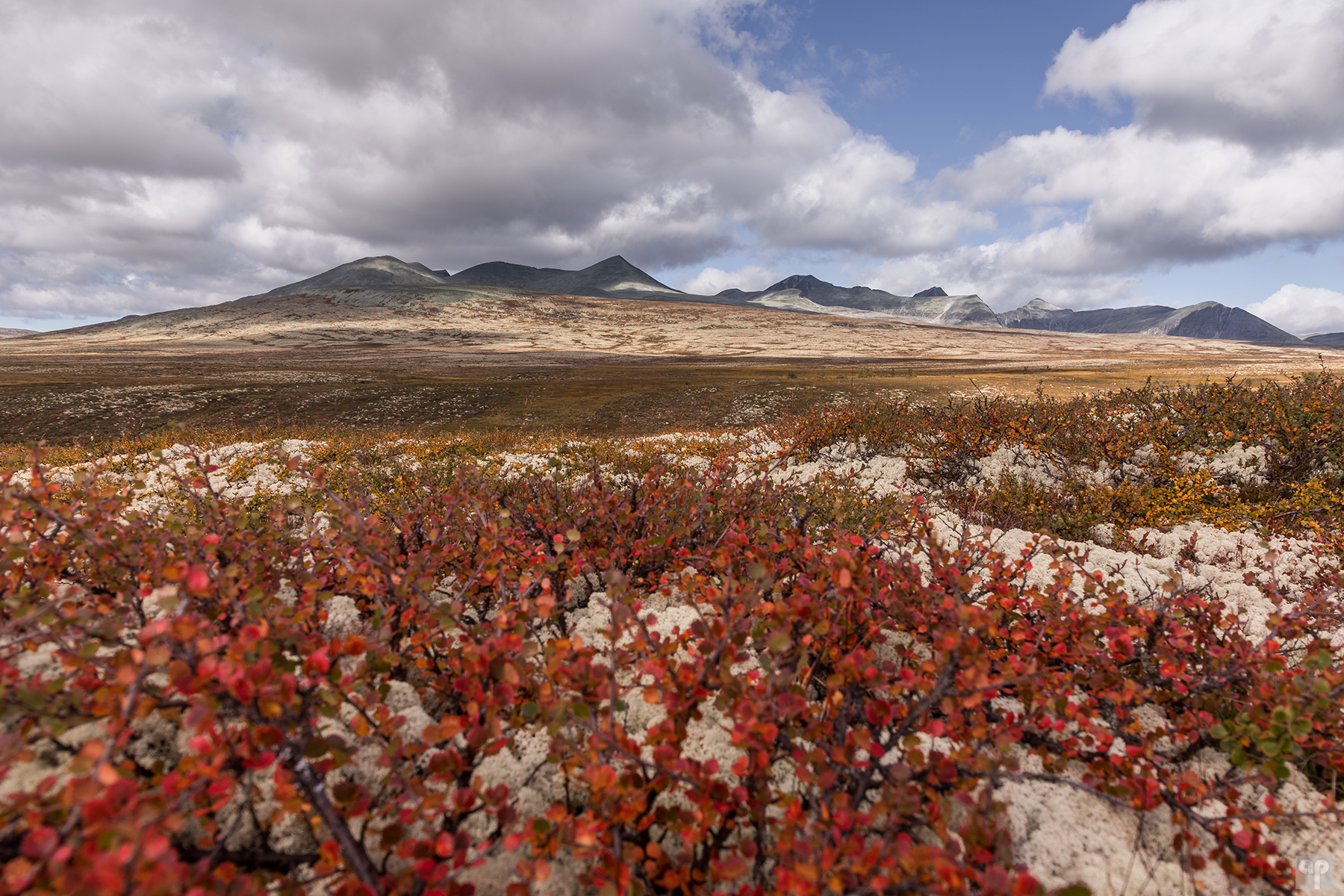 Norwegen - Rondane - Mysusaeter